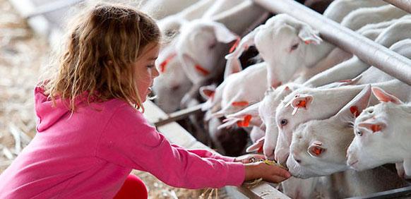 excursiones a granja escuela