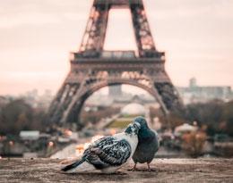 fin de curso París